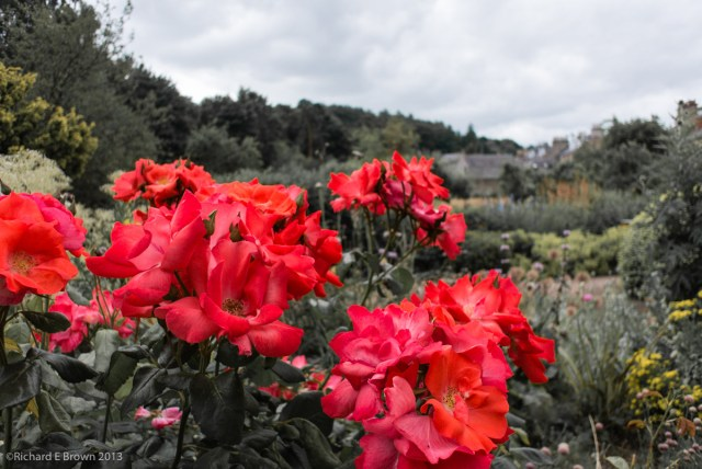 Flowers at Melrose