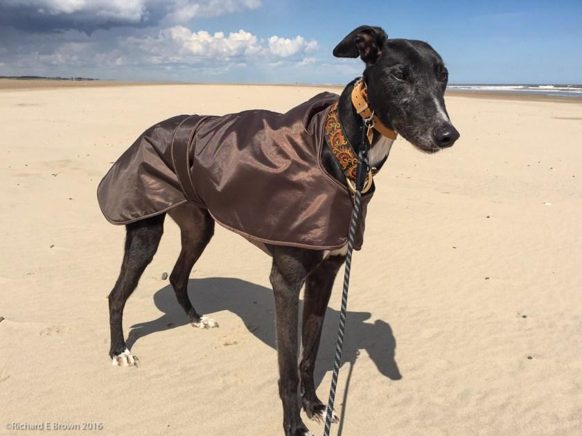 Timmy on the Beach
