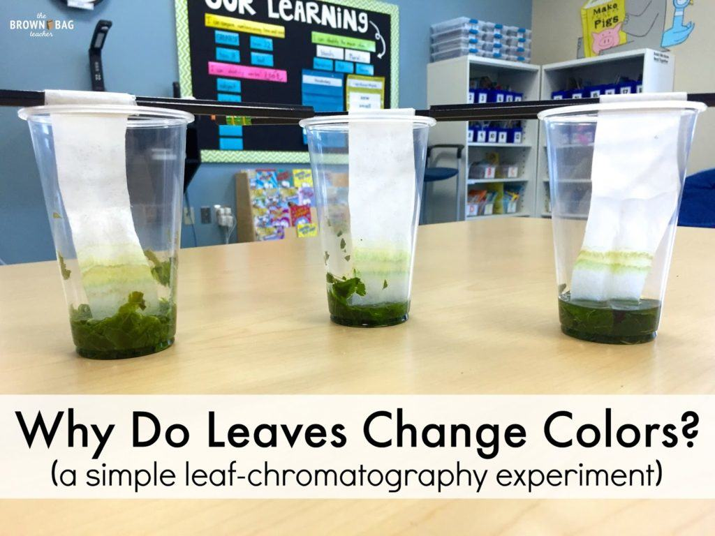 Leaf Chromatography Why Do Leaves Change Color