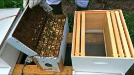 Picture of package of bees
