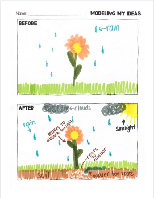 This model of a flower before and after instruction demonstrates how to use the SEPs in Kindergarten.
