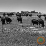 Record pace for beef exports