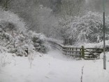 I love the way the snow picks out the detail in the shrubbery and fence.
