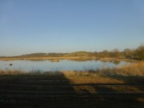 Middleton Lakes, near Kingsbury, is a recently reclaimed series of gravel pits, now being converted to a nature reserve. 3 years ago, this was a working gravel pit.