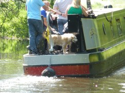Boater dawg