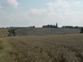 Wheatfield at Stoneywell