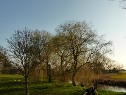 I look forward to the weeping willows coming back into leaf.