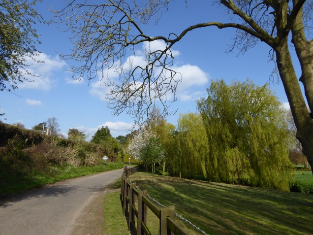 Netherseal. These willows are wonderful in summer
