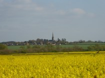 Across the oilseed rape to Clifton from Edingale