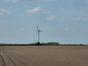 Wind Turrbine at Hayed. Beautiful.