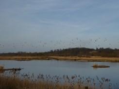 Middleton Lakes