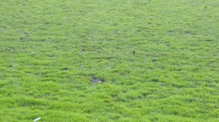 Was the playing surface like this when the ground was inspected this morning?
