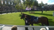 Dont Touch in the Parade Ring