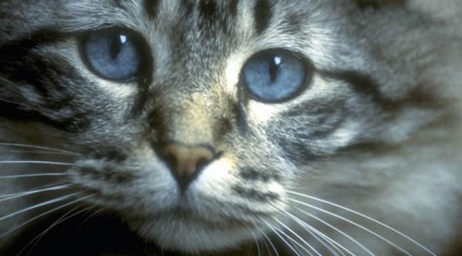 About Cat Litter