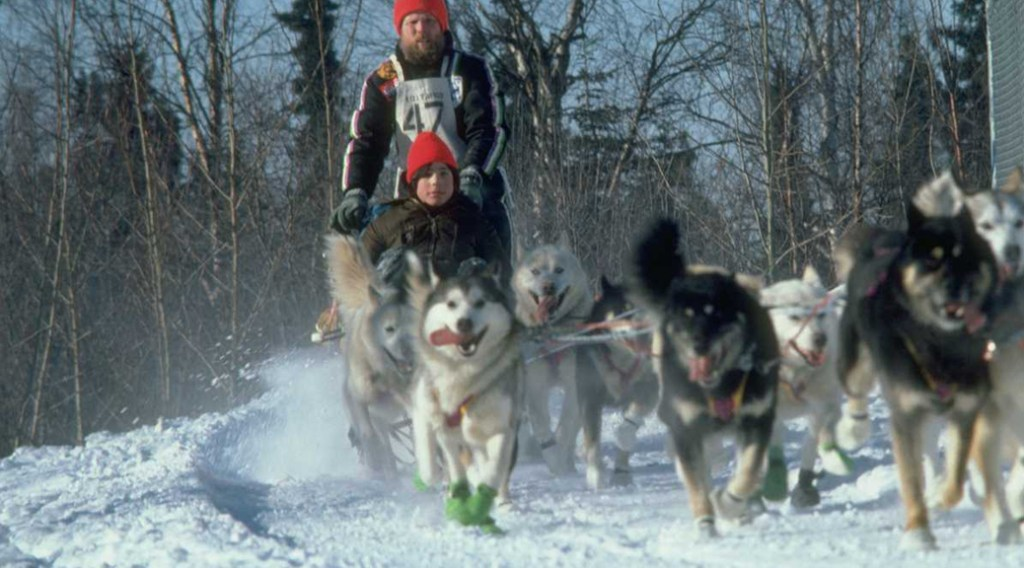 A dog sled team running in snow