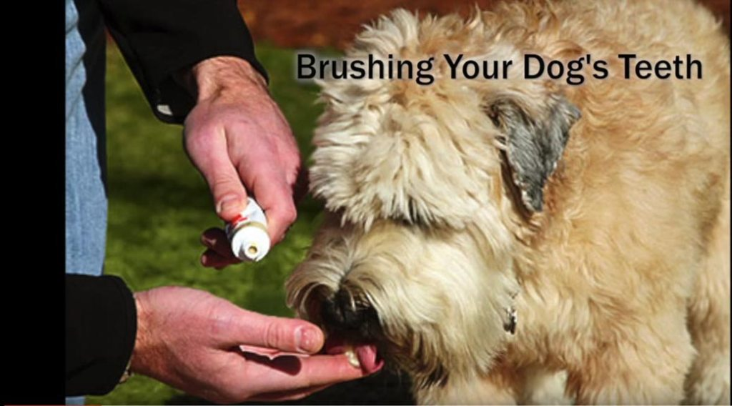 Photo of a dog licking toothpaste off a man's finger