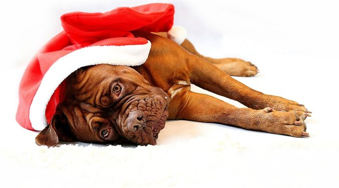 Dog wearing Santa cap