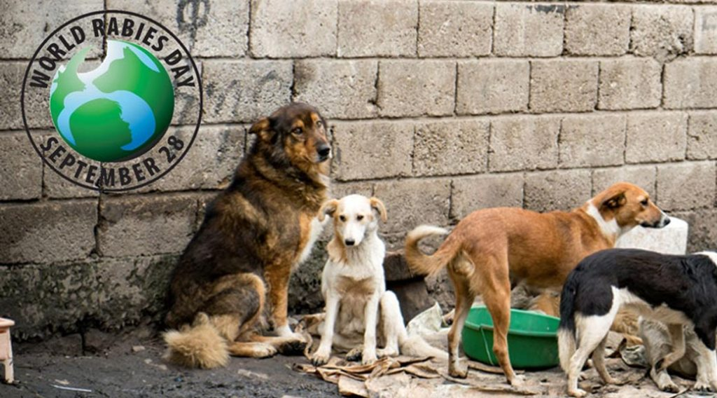 World Rabies Day logo and photo of dogs