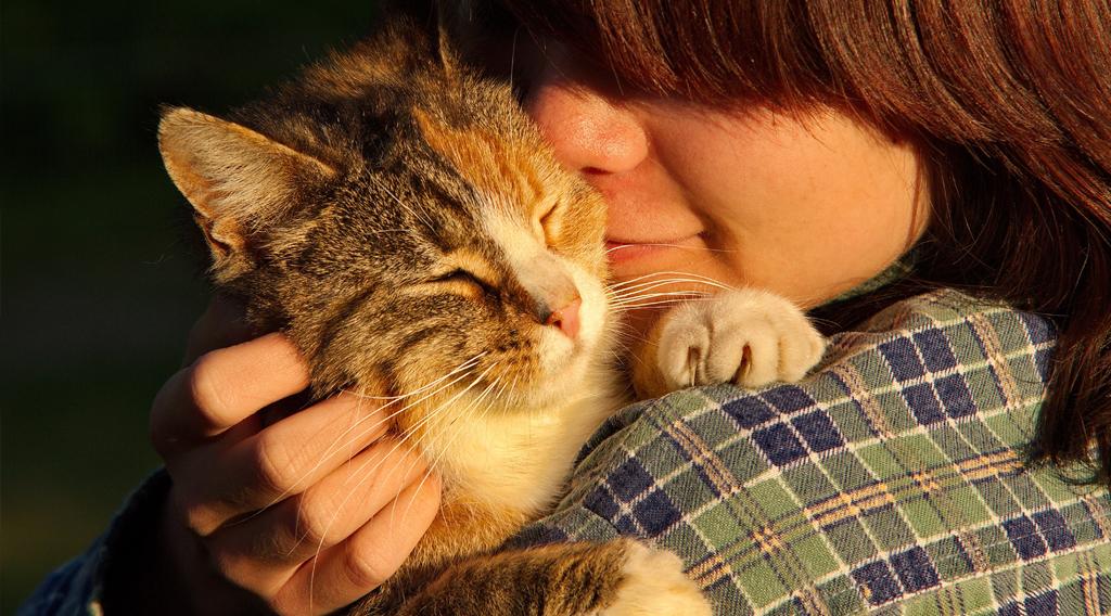 Owner hugging cat