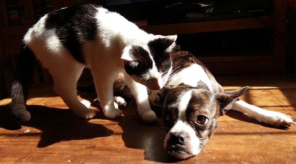 Standing cat sniffing reclining dog's head