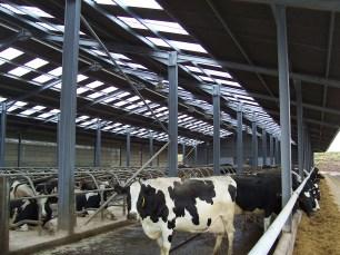 Livestock Internal