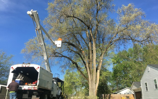 Tree Service in Springfield IL | Brown Storm Service