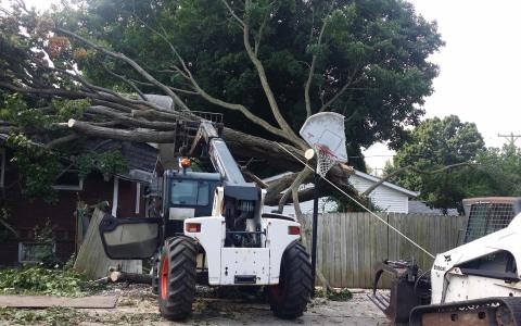 Tree Removal Springfield IL 8 | Brown Storm Service