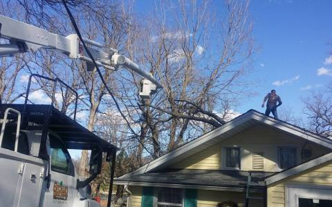 Tree Service Springfield IL 4 | Brown Storm Service