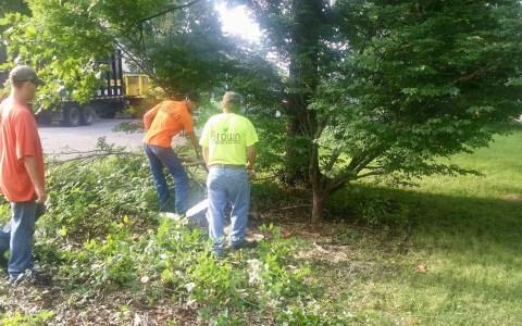 Tree Service Springfield IL 7 | Brown Storm Service