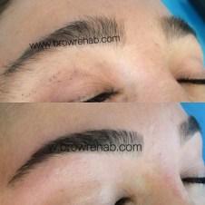brow rehab - brow rehab eyebrows