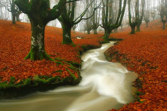 Magic beech - Nature Photography