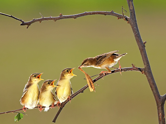 Love Mom - Nature Picture