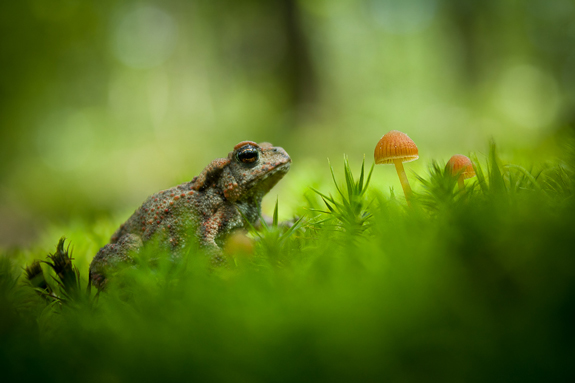 Waiting for a Magic Kiss - Nature