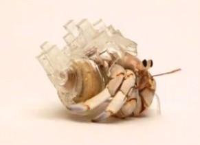ヤドカリの殻で作ったアート