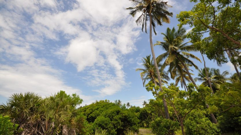 Beach Plot-Ushongo – Tanga
