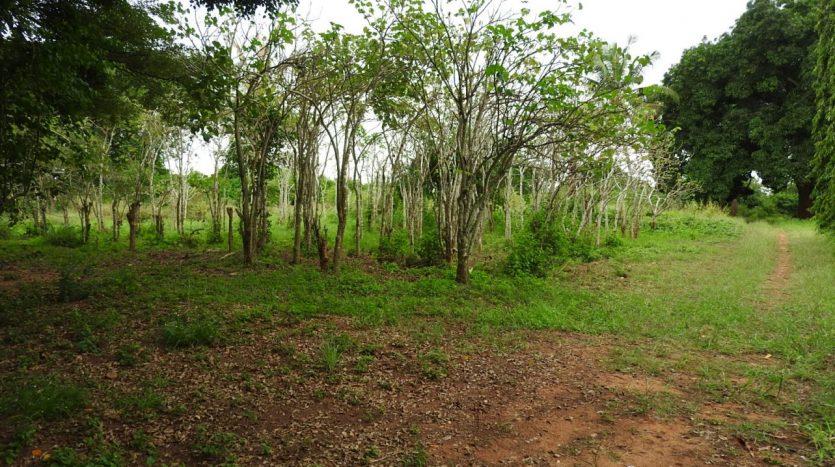 Farm For Sale 16 km Northwest of Tanga
