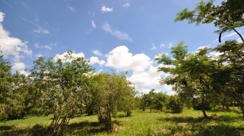 House For Sale In Usariver with 25 Acres12