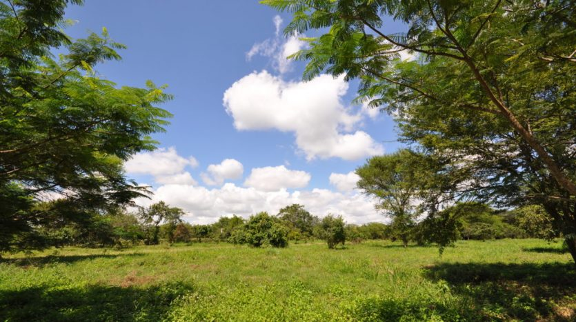 House For Sale In Usariver with 25 Acres9