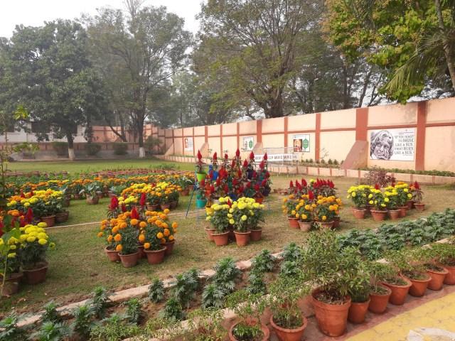 School Garden Dec (1)