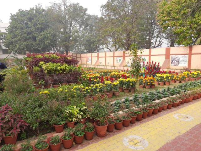 School Garden Dec (2)