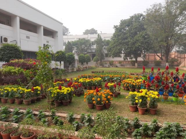 School Garden Dec (7)