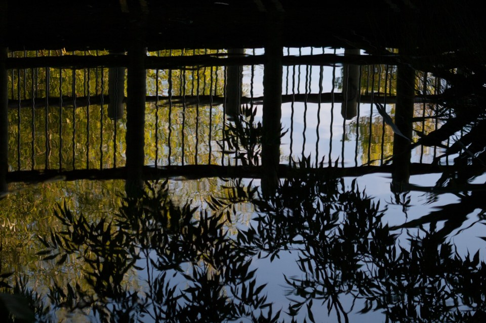 reflection of bridge and trees in stream