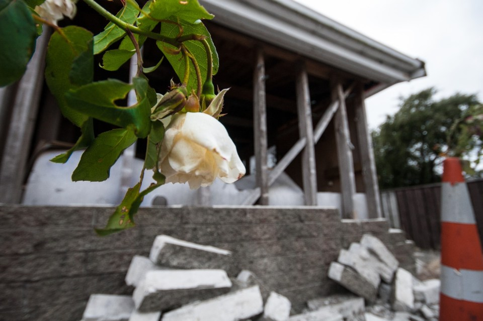 flower in front of a broken building - two years on from the 22/02/2011 christchurch earthquake