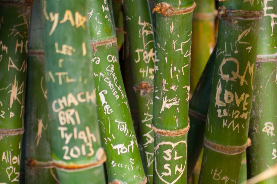 names and messages carved into bamboo at perth zoo