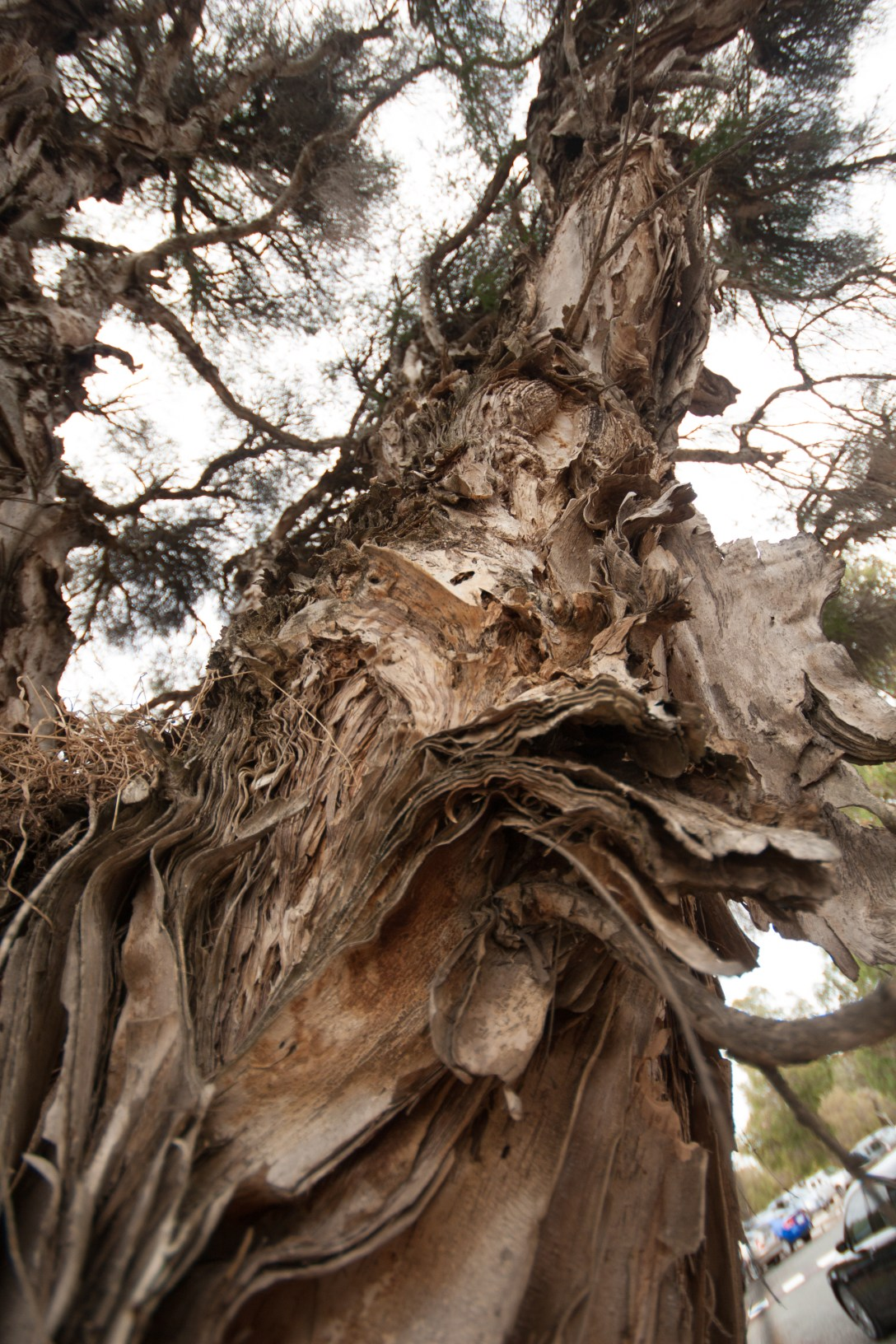 tree comprised of many layers in whitman park - perth