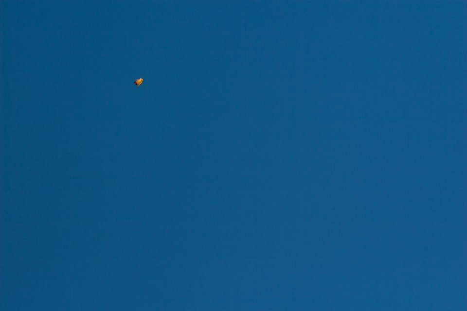 a single leaf floating against the blue sky