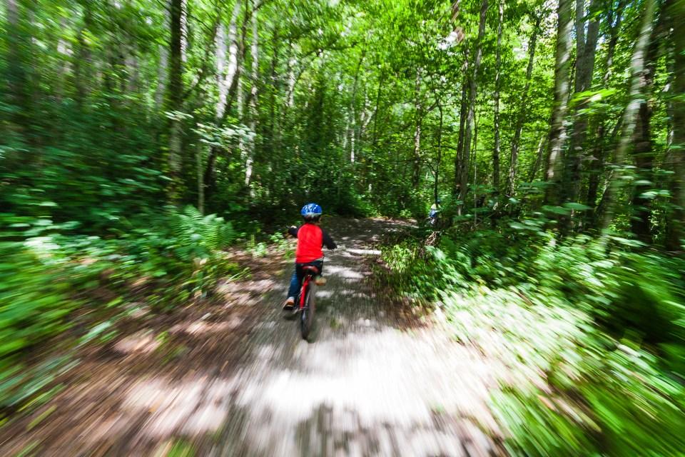 biking through a forest