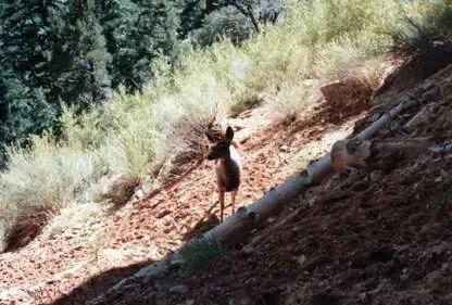 Dear, Deer