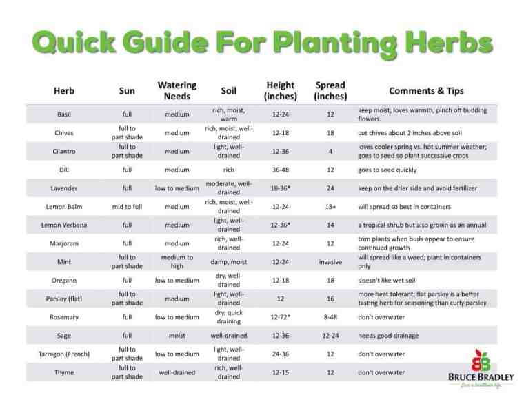 A quick guide for planting herbs including sun, soil, water, and space needs.