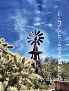 Arizona Desertscape5